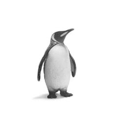 O PINGUIM – Edição 2